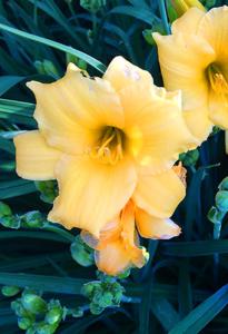flower-06