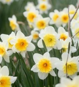 flowers-274x300